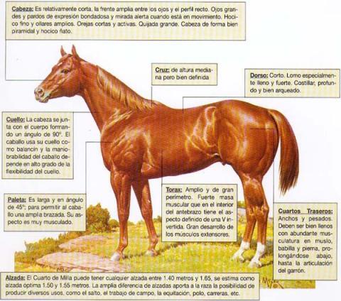 Ledesma Arocena Ganadería S.A. - Criador de Caballos Cuarto de Milla